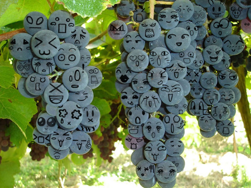 Funny_Grape _pics_4